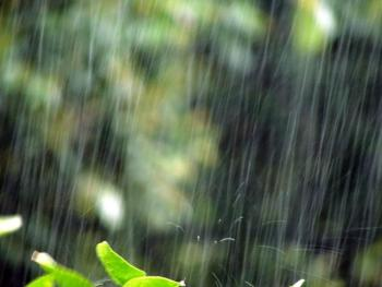 雨仕舞 役割